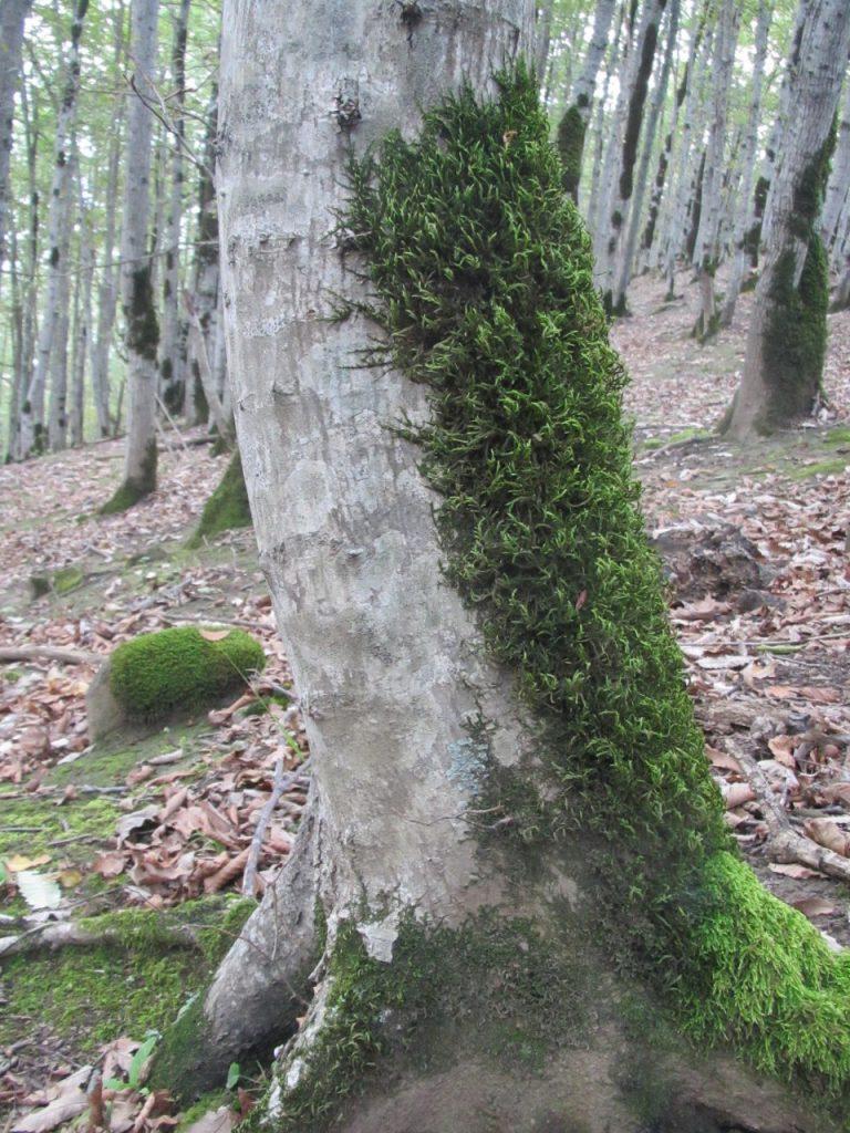تصویر از جهت یابی در جنگل به کمک خزه