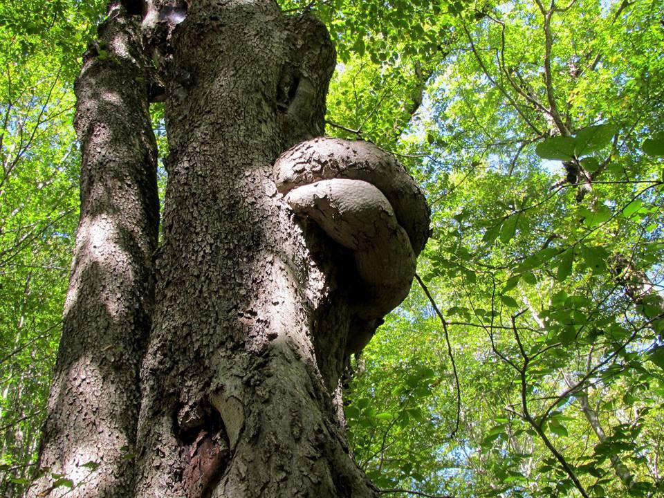 تصویر از درخت انجلینا