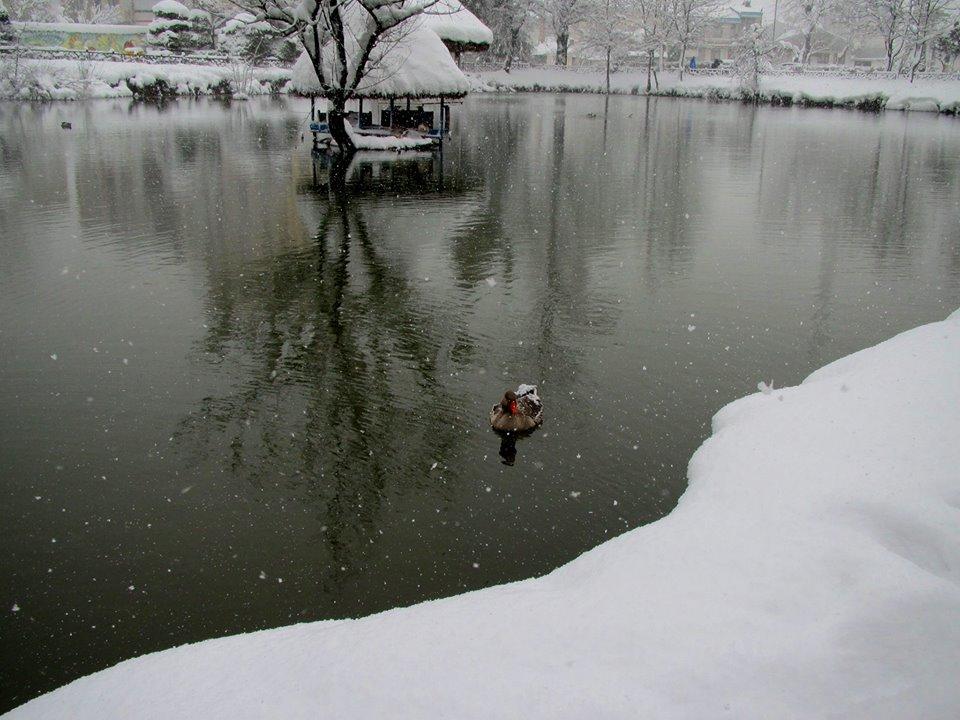 تصویر از ای مدعی که میگذری بر کنار آب..!