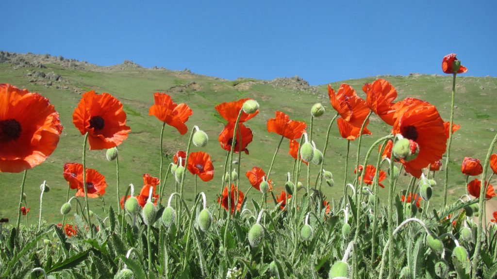تصویر از سوباتان،پازلی از بهشت بر بلندای غرب گیلان..!