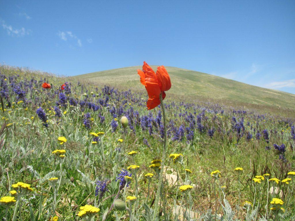 تصویر از قله شاه معلم ماسوله