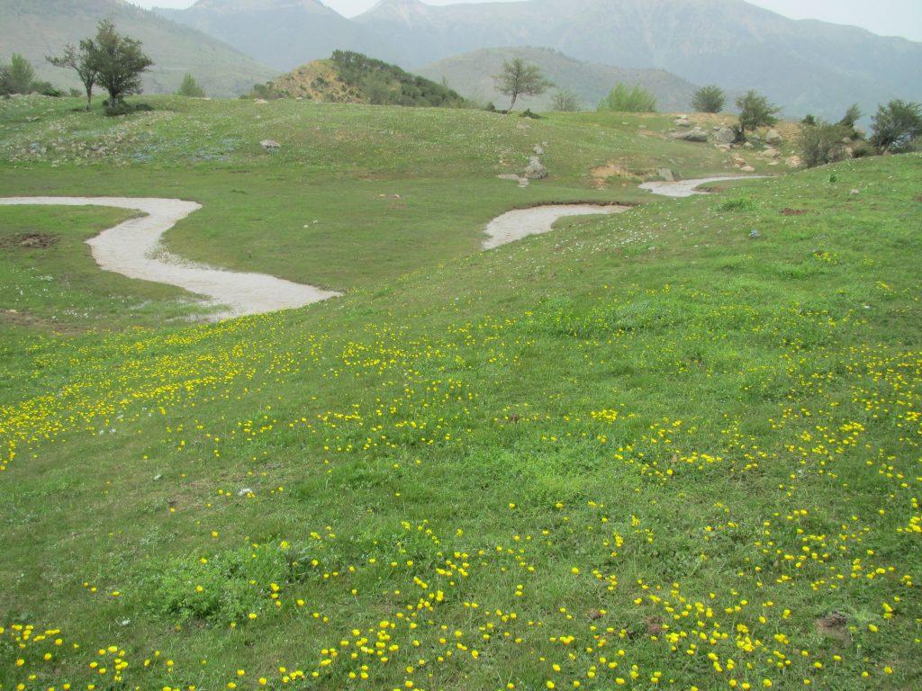 تصویر از کوهروبار