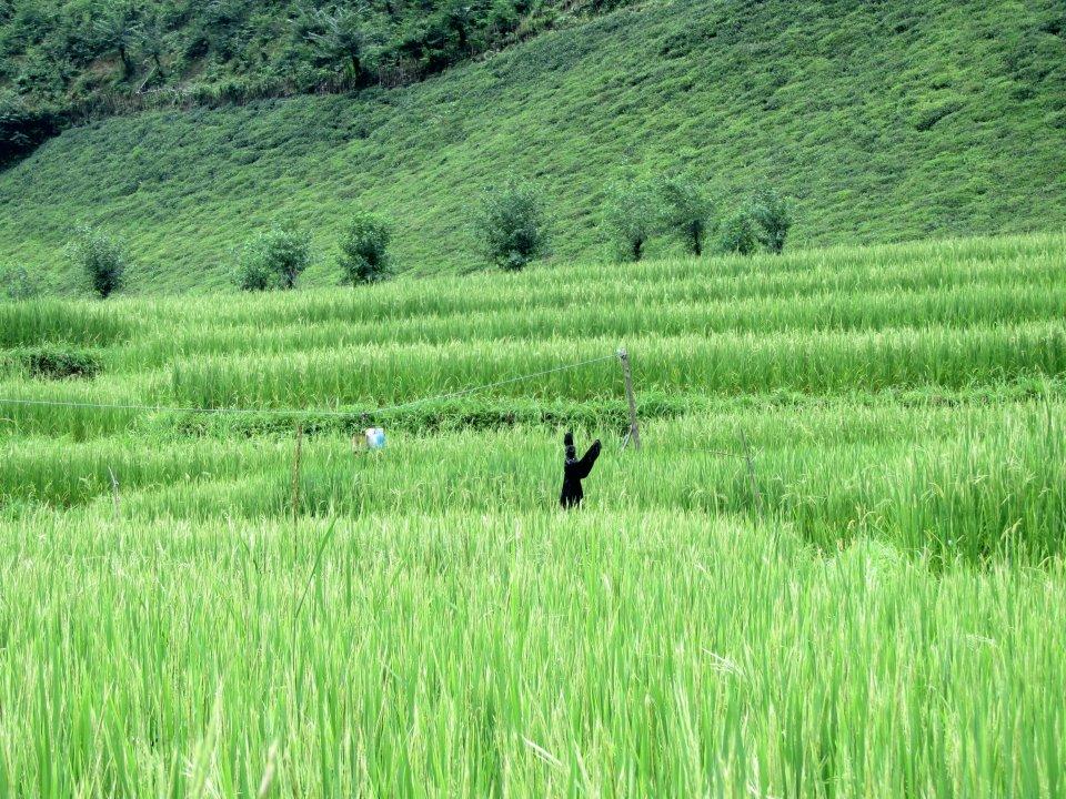 تصویر از کشاورزی مکانیزه