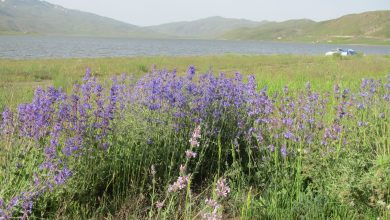 تصویر از دریاچه نئور