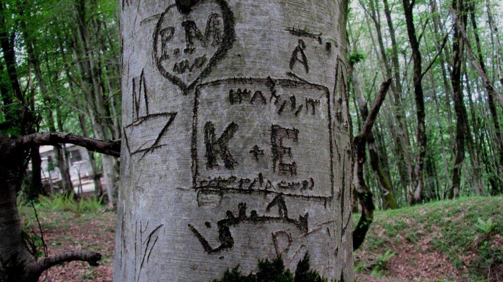درخت نوشته